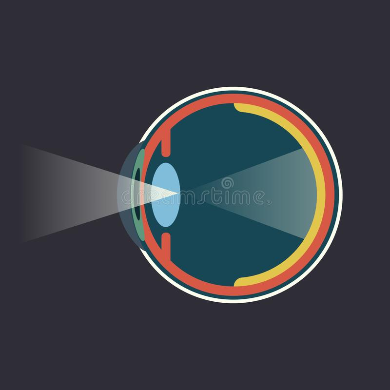 Схема взрезывания человеческого глаза infograpgic иллюстрация вектора