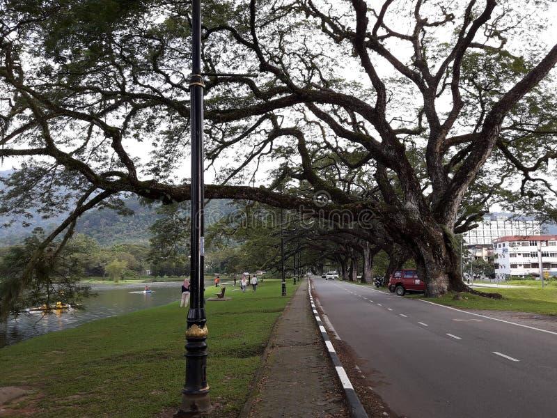 Сценарная дорога с raintrees около озера стоковое изображение rf