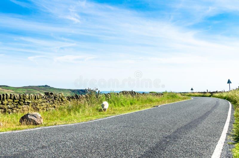 Сценарная одиночная проселочная дорога майны при уединённая овца пася стоковая фотография