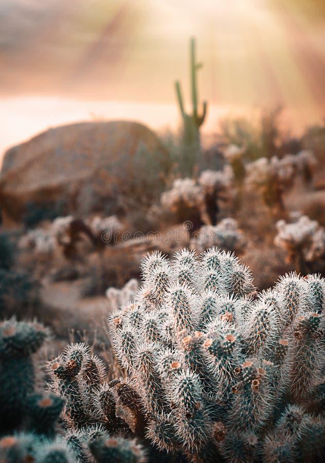 Сценарная перспектива пустыни стоковые изображения rf