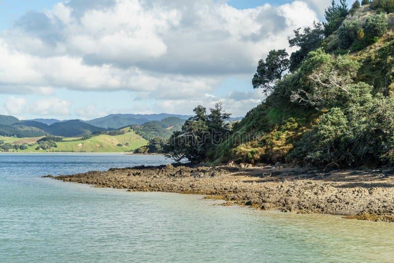 сценарная съемка красивого зеленого seashore с деревьями, парка Waitawa регионального, стоковое изображение rf