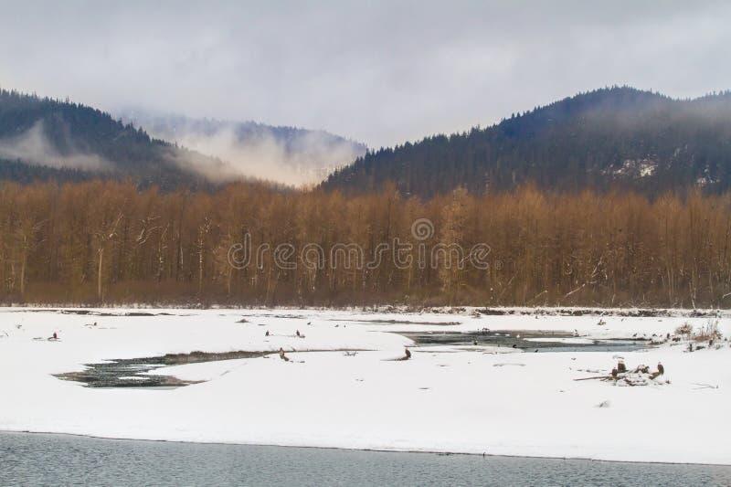 Сценарная точка зрения реки Chilkat стоковые фотографии rf