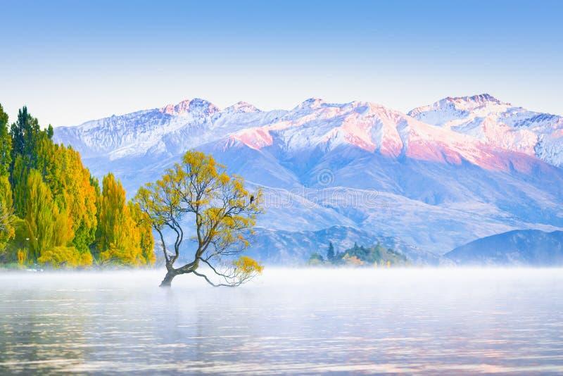 Сценарное мирное wanaka озера стоковое фото rf
