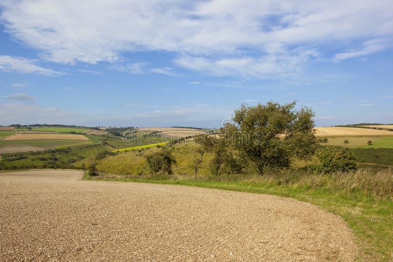Сценарное bridleway стоковое фото