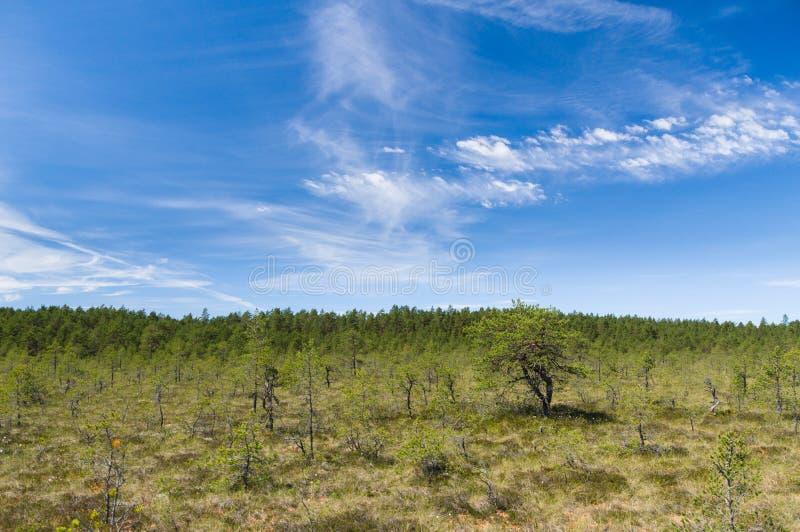 Сценарное cloudscape над зоной трясины Viru стоковое фото rf