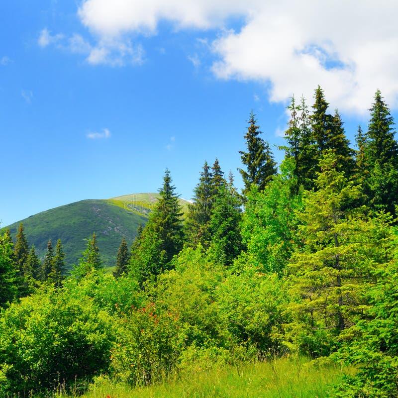 Сценарные горы, луга и голубое небо стоковые изображения