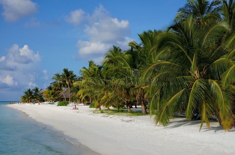 Сценарный ландшафт солнечного тропического бечевника пляжа океана с белым песком, пальмами кокоса и голубым небом Идилличный пейз стоковые изображения rf