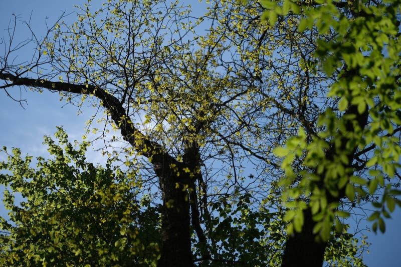 Сценарный взгляд деревьев в лесе во время дневного времени стоковое фото rf