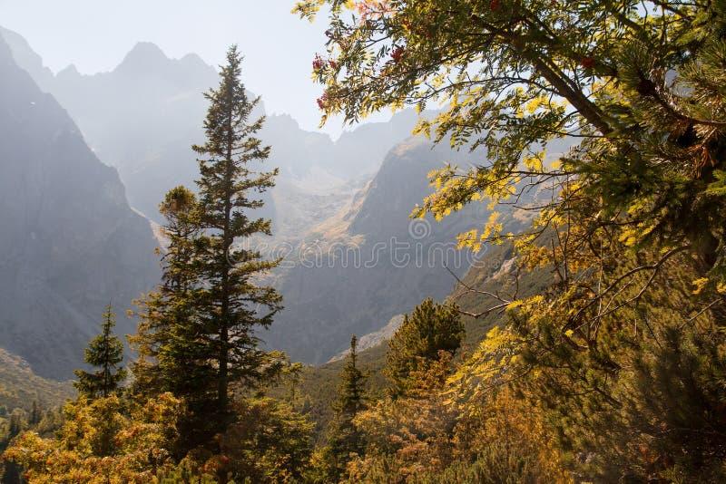 Сценарный взгляд ландшафта туманной высокогорной долины стоковое изображение