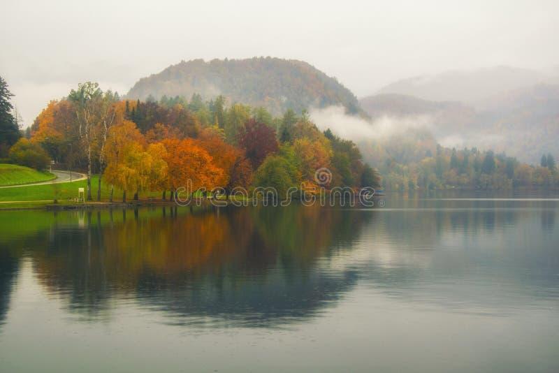 Сценарный взгляд красочных деревьев отразил в воде озера стоковые изображения rf