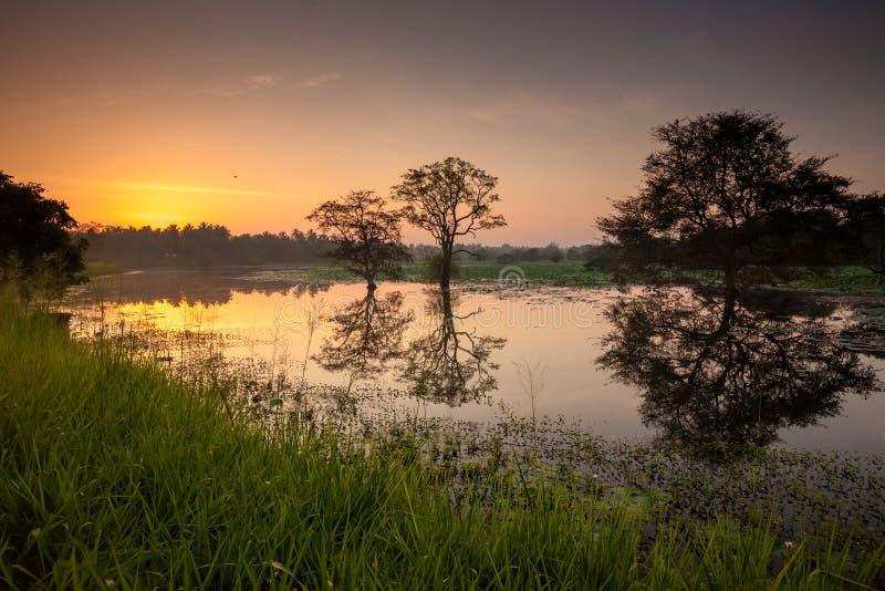 Сценарный взгляд на зеркале большого озера в Шри-Ланке во время восхода солнца стоковые фото