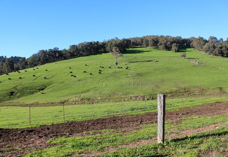 Сценарный взгляд paddocks западной Австралии River Valley Коллиы сельских. стоковое изображение