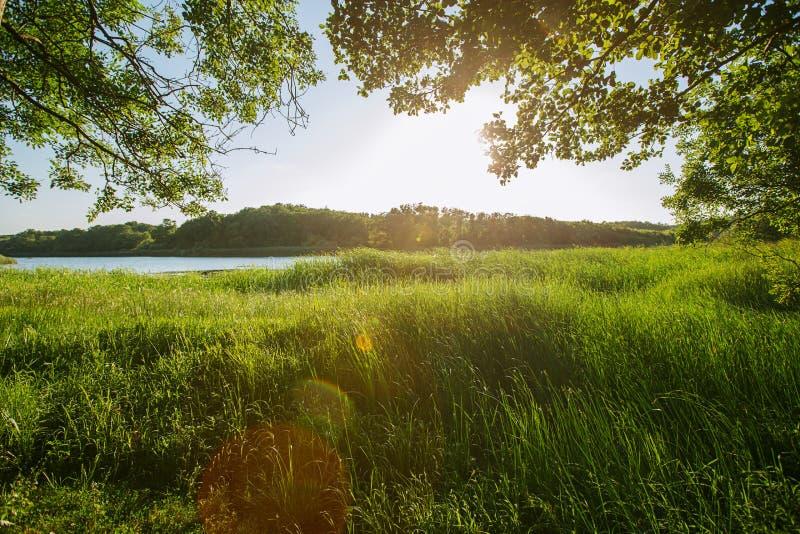 Сценарный взгляд wildwood и реки, запаса парка стоковые изображения rf