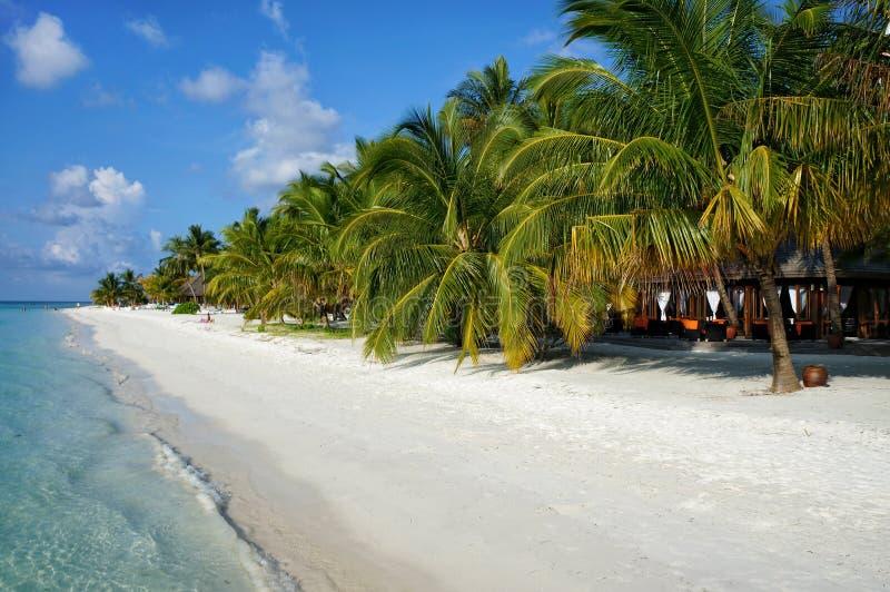Сценарный ландшафт солнечного тропического бечевника пляжа океана с белым песком, пальмами кокоса и голубым небом Идилличный пейз стоковые фотографии rf