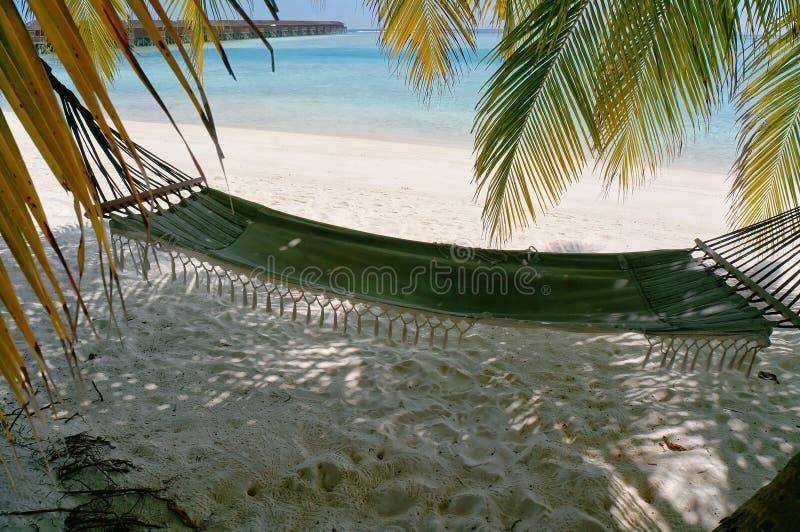 Сценарный ландшафт солнечного тропического пляжа океана с белым песком, пальмами и гамаком Идилличный пейзаж курорта на море Exot стоковая фотография