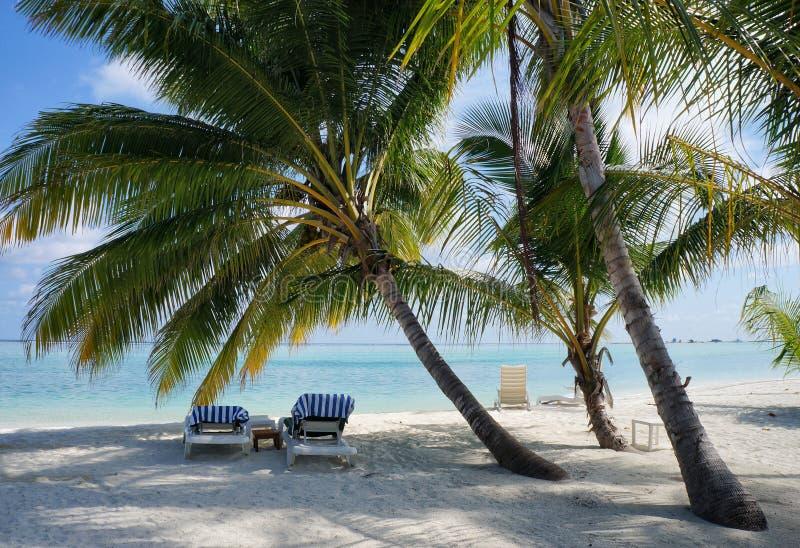Сценарный ландшафт солнечного тропического пляжа океана с белым песком, пальмами, голубым небом и креслами для отдыха Идилличный  стоковое изображение rf