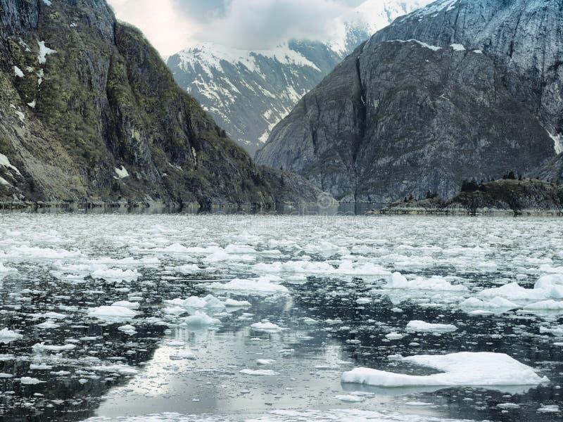 Сценарный прибрежный ландшафт с крутыми ледниково отполированными скалами и плавая льдом на фьорде руки Трейси стоковое изображение