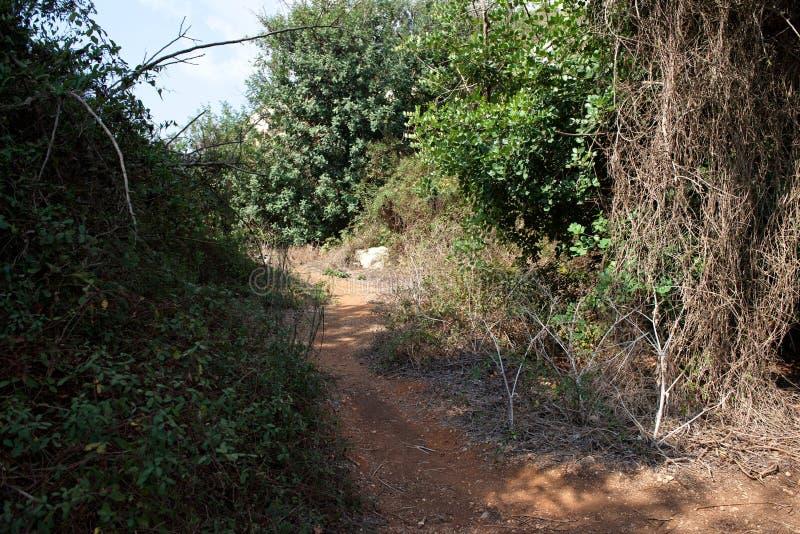 Сценарный скалистый путь на солнечный день в долине Babu & x28; Weid Babu& x29; , Zurrieq, Мальта Живописная шикарная сцена стоковые изображения