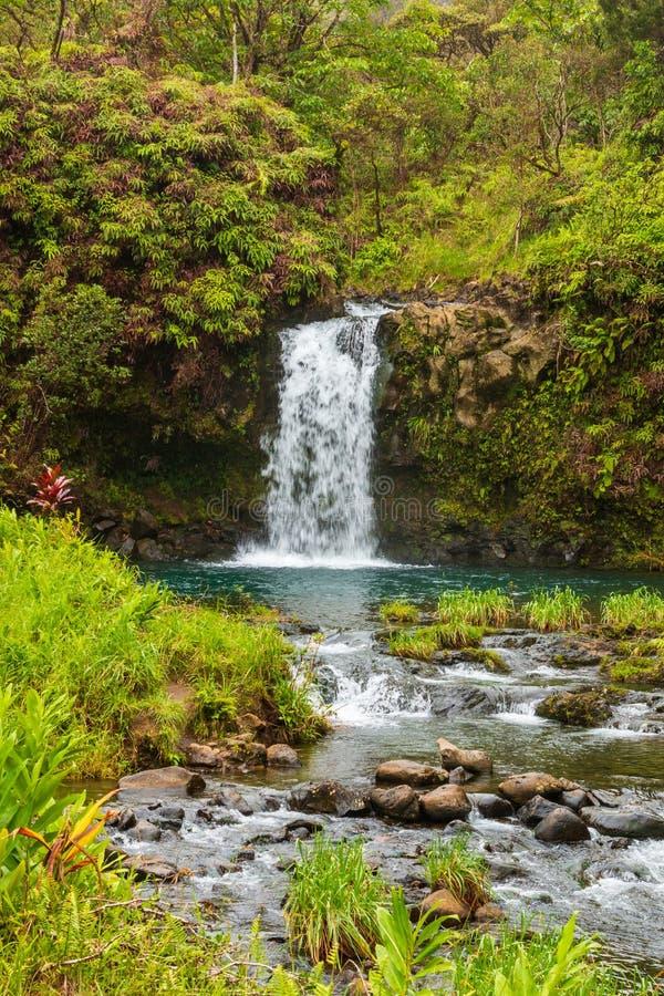 Сценарный тропический водопад на Мауи стоковое фото rf