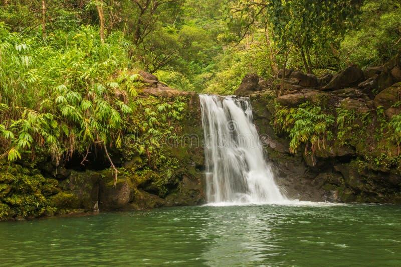 Сценарный тропический водопад стоковое изображение rf