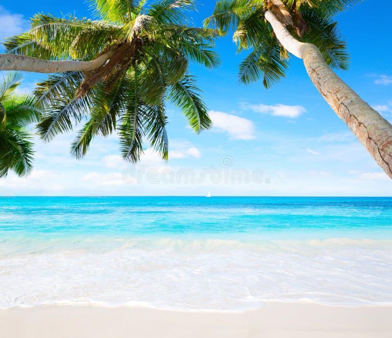 Сценарный seascape с водой бирюзы пальм и океанов кокоса Идилличная тропическая сцена пляжа стоковые фото