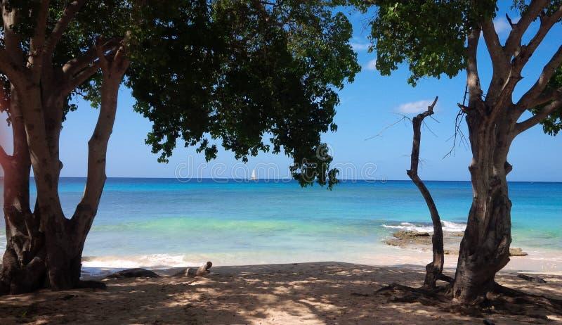 Сцена Барбадоса и Карибского бассейна стоковые изображения