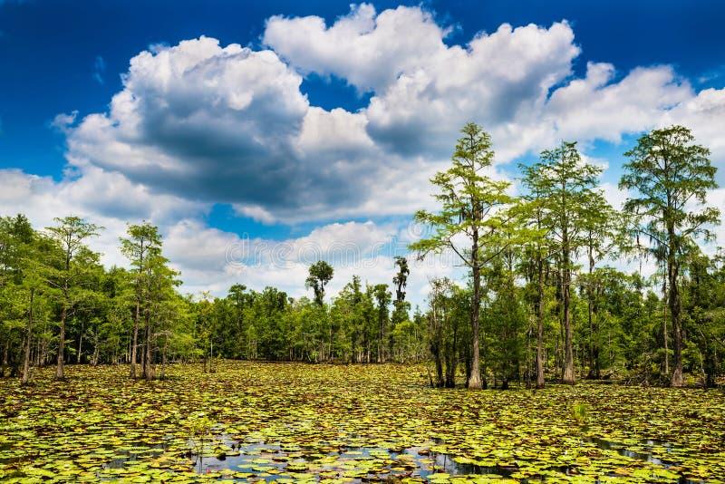 Сцена болота лета стоковое изображение