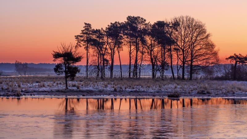 сцена Влажн-земли со строкой деревьев и красного покрашенного восхода солнца, Turnhoutse Vennen, Фландрии, Бельгии стоковые фотографии rf