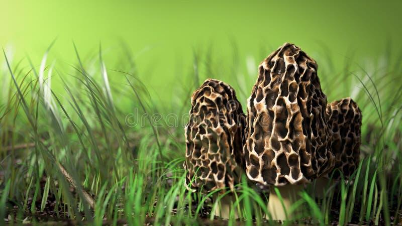 Download Сцена гриба сморчка иллюстрация штока. иллюстрации насчитывающей трава - 41660157