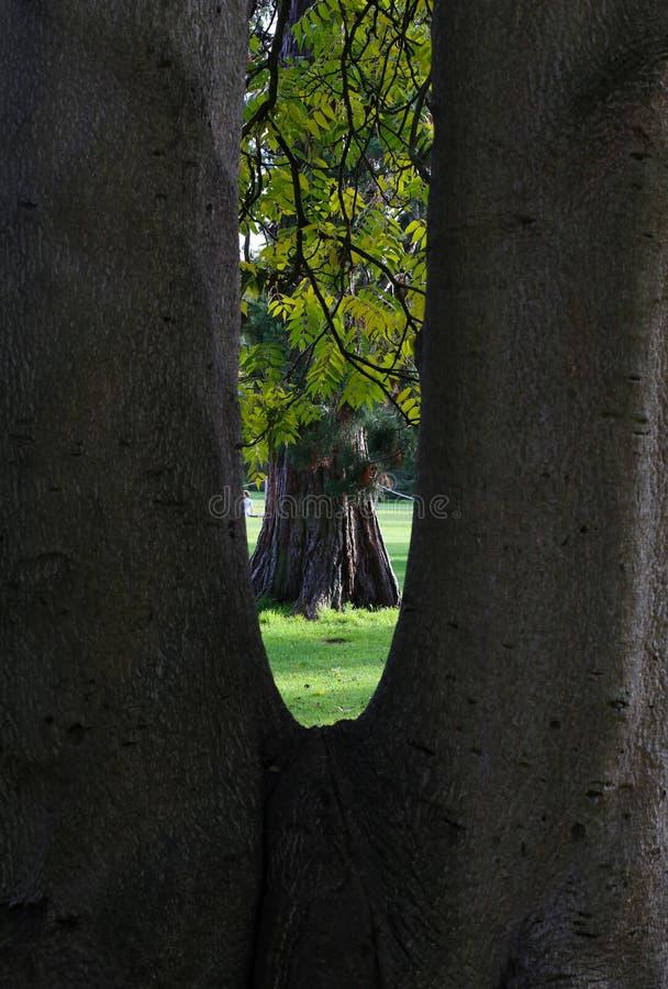 Сцена дерева осени обрамленного через клиновидное дерево стоковая фотография