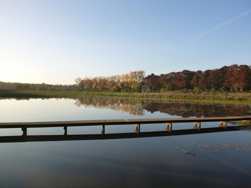 Сцена леса с прудом и пути над водой стоковая фотография rf