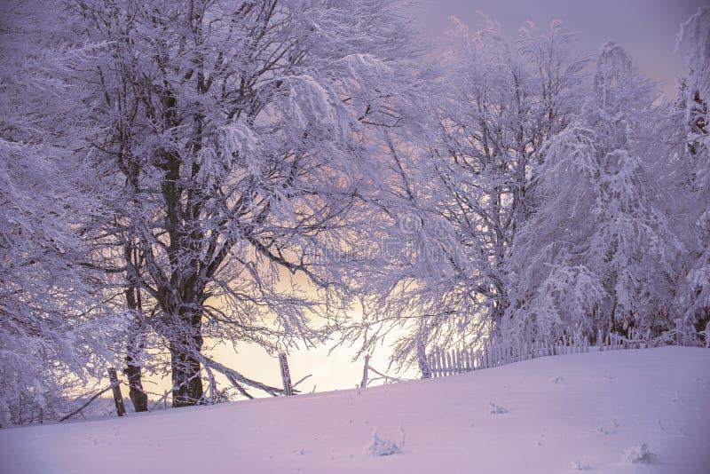 Сцена зимы волшебная на горе в Румынии стоковая фотография