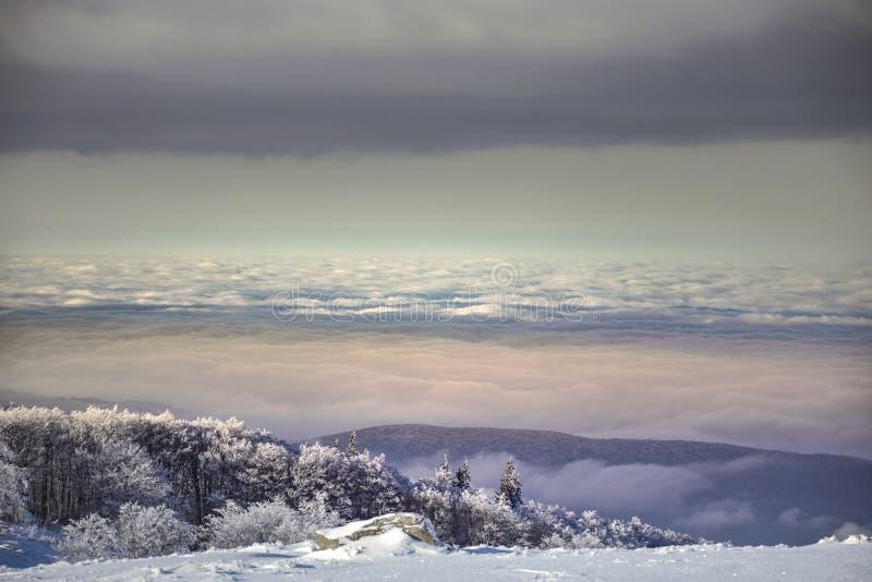 Сцена зимы волшебная на горе Румынии Semenic стоковые фото