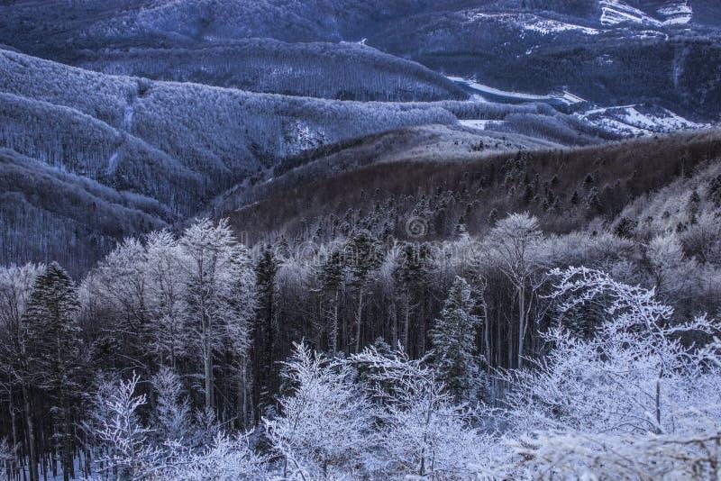 Сцена зимы волшебная на горе Румынии Semenic стоковые изображения