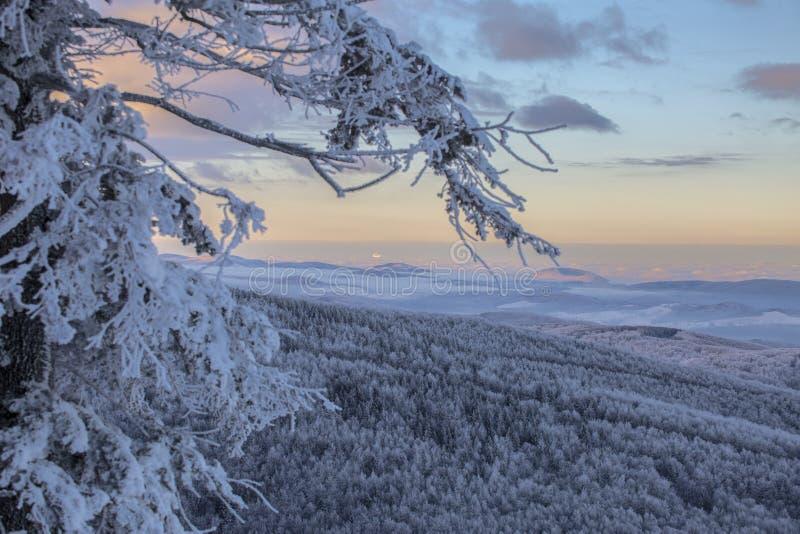 Сцена зимы волшебная на горе Румынии Semenic стоковое фото rf