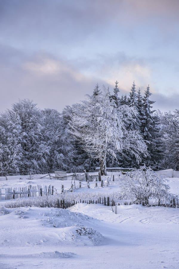 Сцена зимы волшебная на горе Румынии Semenic стоковая фотография