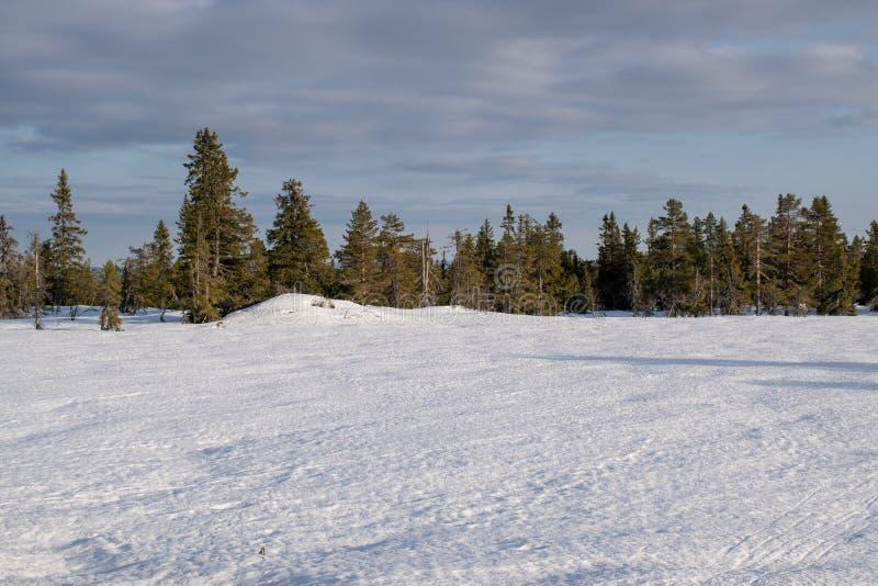 Сцена зимы в графстве Норвегии Hedmark стоковая фотография