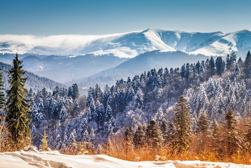 Сцена зимы, ландшафт сказки зимы в горах стоковые фото