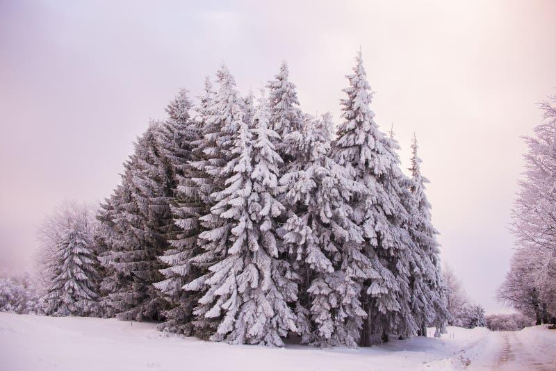 Сцена зимы на горе Румынии Semenic стоковое фото