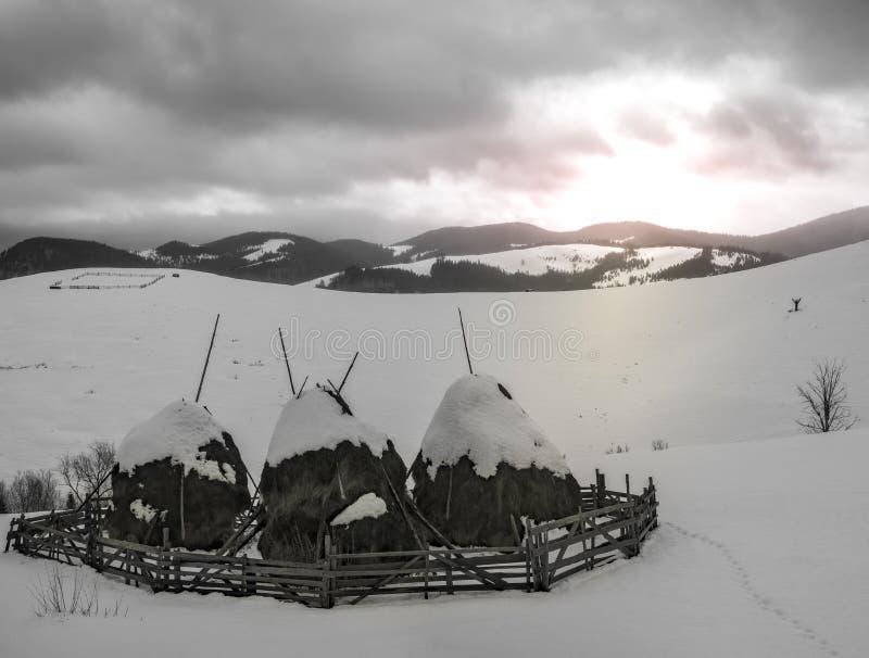 Сцена зимы сельская со снегом покрыла стога сена, однокрасочные стоковая фотография rf