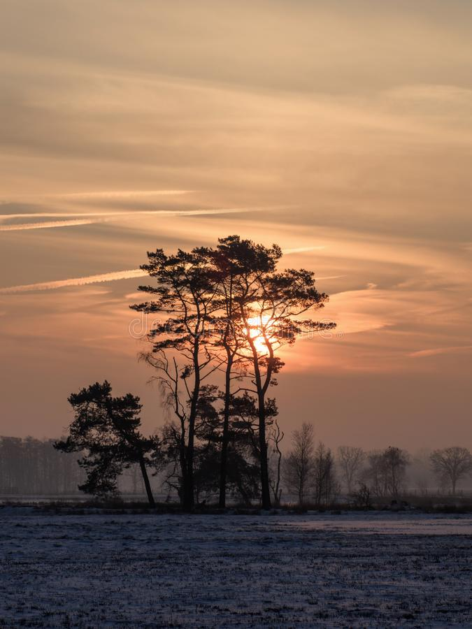 Сцена зимы, снег покрыла заболоченное место и красивые форменные деревья на рассвете, Turnhoutse Vennen, Фландрии, Бельгии стоковая фотография