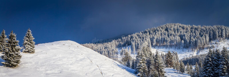 Сцена зимы с снегом покрыла ели стоковые фото
