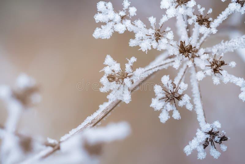 Сцена зимы стоковое изображение rf