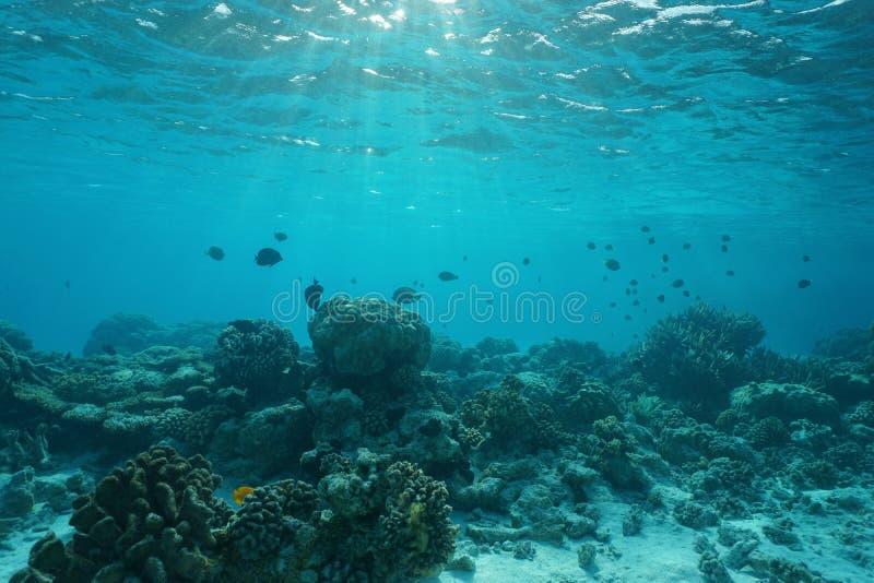 Сцена кораллового рифа подводного моря отмелая естественная стоковая фотография rf