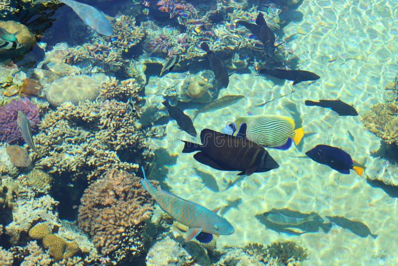 Сцена кораллового рифа стоковое фото rf