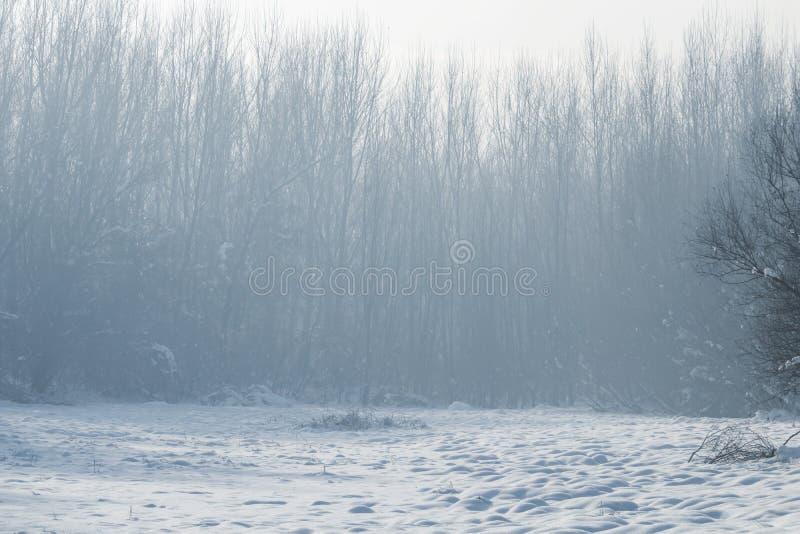 Сцена леса зимы туманная, холодный туманный лес со снегом стоковые изображения