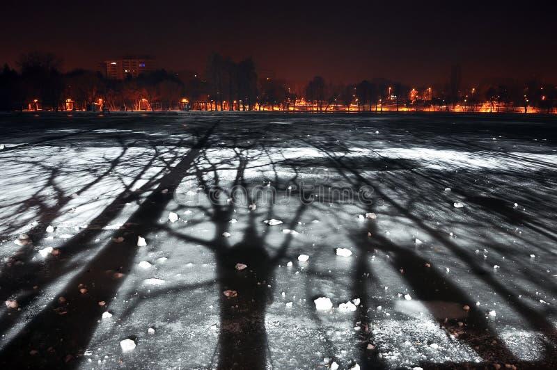 Сцена ночи парка зимы стоковые изображения