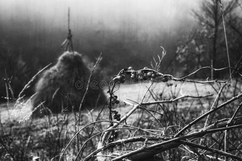 Сцена осени волшебная на горе в Румынии стоковое изображение