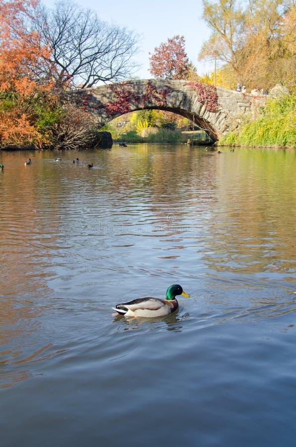 Сцена осени Central Park, Нью-Йорк стоковая фотография rf