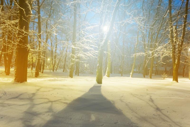 Сцена парка ночи зимы snowbound в свете стоковые изображения rf